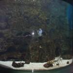 Aquarium15